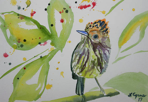 Painting - Watercolor - Scale Crested Pygmy Tyrant by Cascade Colors