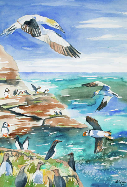 Painting - Watercolor - Seabirds Of The North Atlantic by Cascade Colors