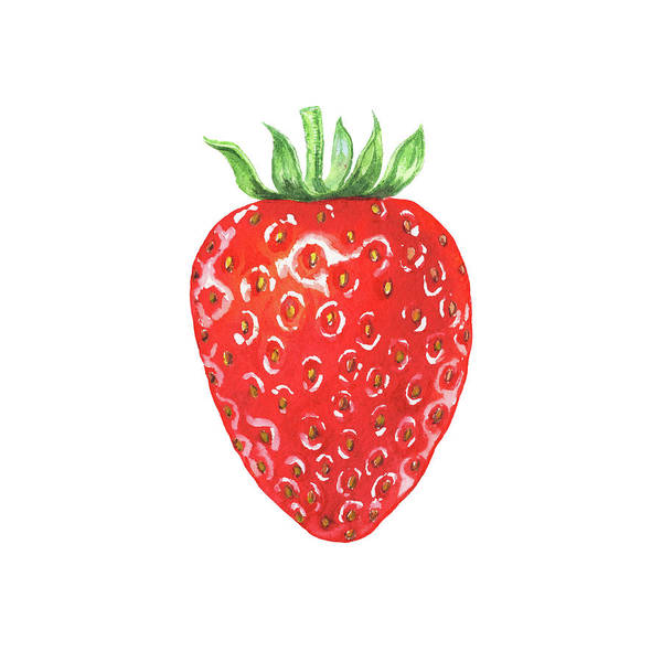 Painting - Watercolor Strawberry  by Irina Sztukowski