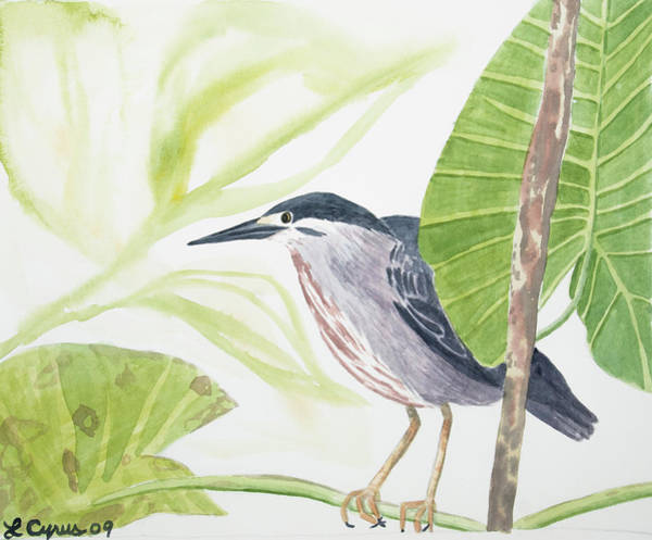 Painting - Watercolor - Striated Heron by Cascade Colors