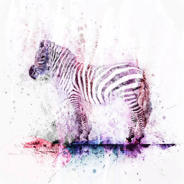 Digital Art - Watercolor Wash Zebra by Christina VanGinkel