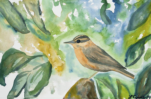 Painting - Watercolor - Worm-eating Warbler by Cascade Colors