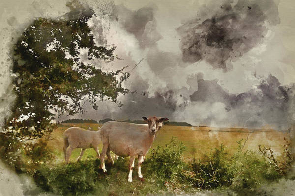 Ovine Photograph - Watercolour Painting Of Farm Sheep In Landscape On Stormy Summer Day by Matthew Gibson