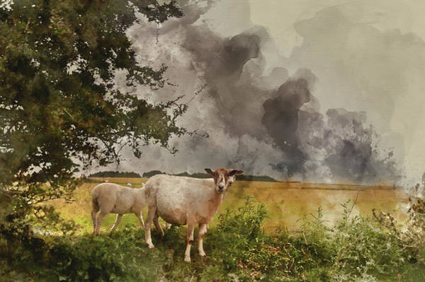 Ovine Photograph - Watercolour Painting Of Farm Sheep In Landscape On Stormy Summer by Matthew Gibson