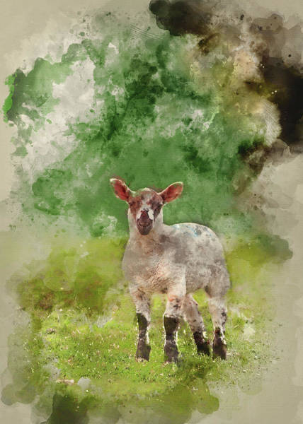 Ovine Photograph - Watercolour Painting Of Spring Lamb In Spring Rural Farm Landsca by Matthew Gibson