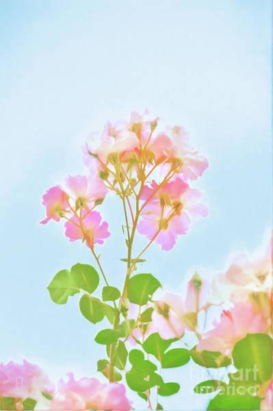 Photograph - Watercolour Roses by Elaine Teague
