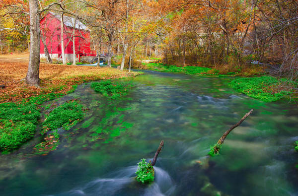 Riverway Photograph - Watercress At Alley Spring  by Jackie Novak