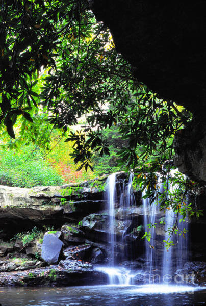 Birch River Photograph - Waterfall And Rhododendron by Thomas R Fletcher
