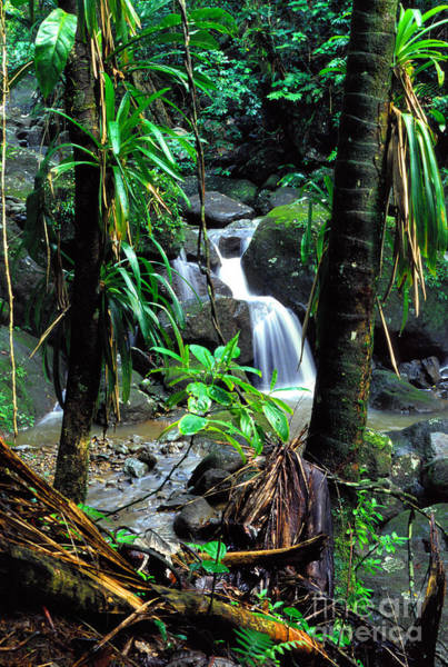 Photograph - Waterfall El Yunque National Forest Mirror Image by Thomas R Fletcher