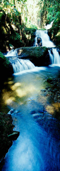 Thicket Photograph - Waterfall Hilo Hi by Panoramic Images