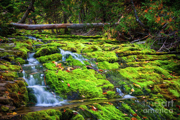 Photograph - Waterfall Over Mossy Rocks by Elena Elisseeva