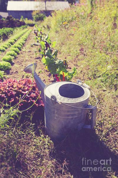 Wall Art - Photograph - Watering Can In A Farm Field by Edward Fielding