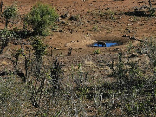Photograph - Watering Hole - South Africa by Karen Zuk Rosenblatt