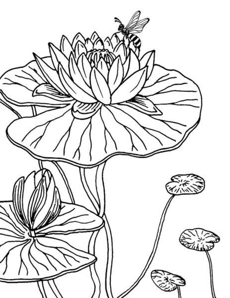 Drawing - Waterlily And Bee Drawing  by Irina Sztukowski