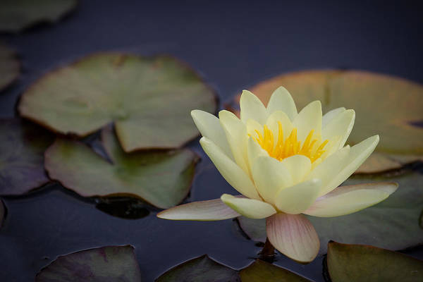 Photograph - Waterlily by Clare Bambers