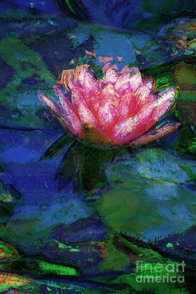 Photograph - Waterlily by Donna Bentley