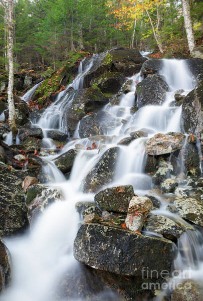 Photograph - Waternomee Brook Cascades - White Mountains, New Hampshire by Erin Paul Donovan