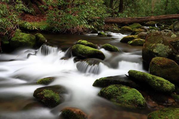 Photograph - Waters Along Roaring Fork Motor Trail  by Carol Montoya
