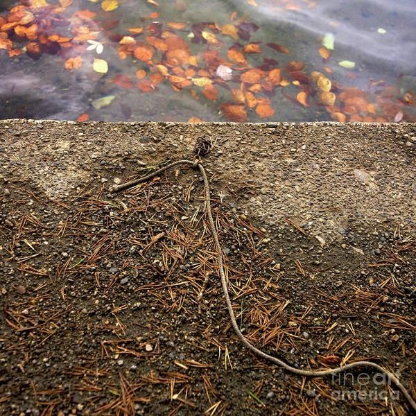 Fallen Leaf Lake Photograph - Water's Edge by Bernard Jaubert