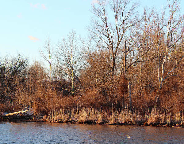 Photograph - Northeast River Banks by Melinda Blackman