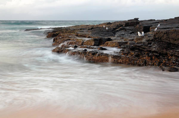 Photograph - Water's Edge by Nicholas Blackwell