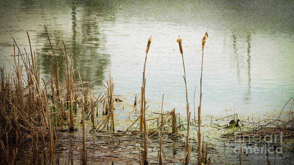 Photograph - Water's Edge No. 1 by Todd Blanchard