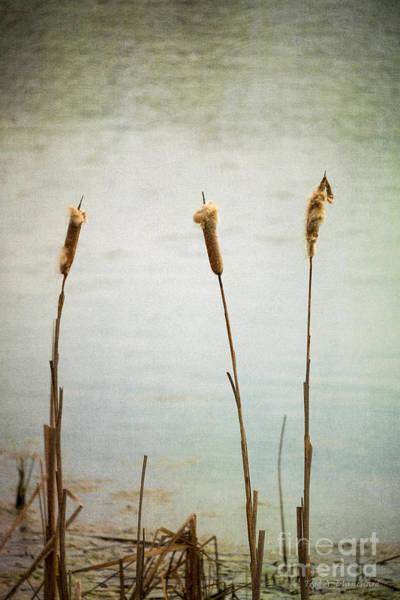 Water's Edge No. 2 Art Print