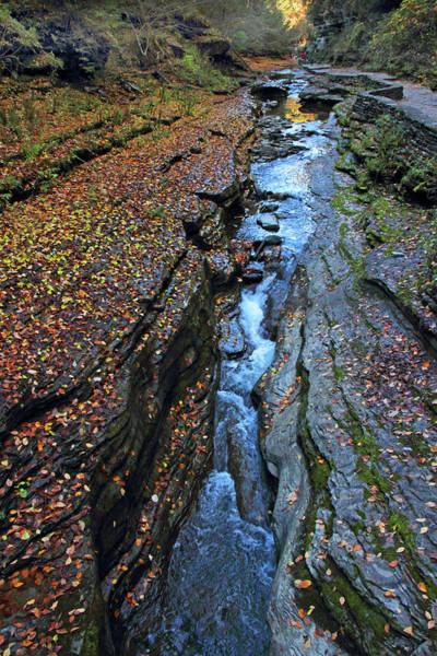 Fallen Leaf Lake Photograph - Watkins Glen Abstract by Jessica Jenney