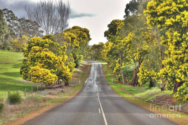 Photograph - Wattle Trees, Bridgetown, Western Australia by Elaine Teague