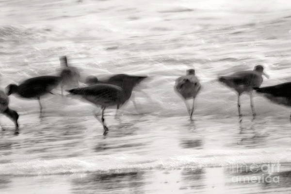 Photograph - Plundering Plover Series In Black And White 3 by Angela Rath