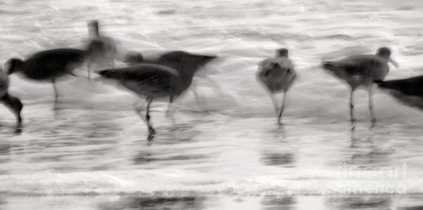 Photograph - Plundering Plover Series In Black And White 5 by Angela Rath