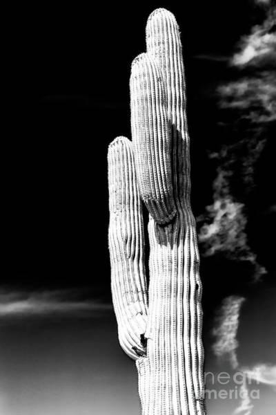 Photograph - Waving Cactus In The Desert by John Rizzuto