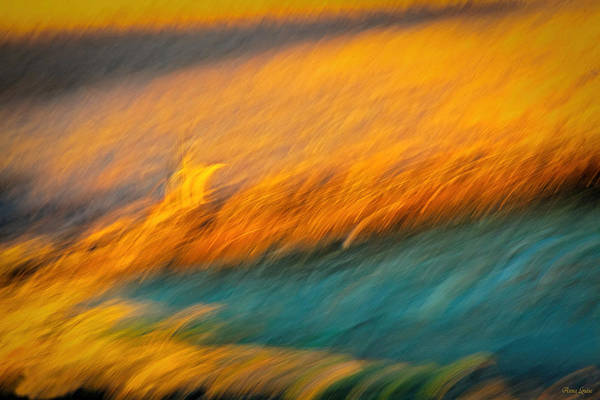 Photograph - Waving Prairie Grasses by Anna Louise