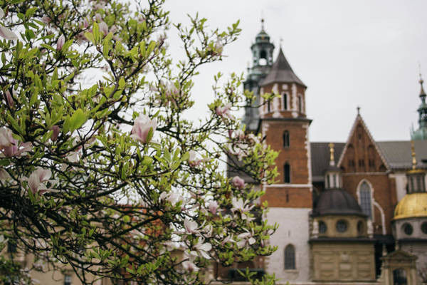 Wall Art - Photograph - Wawel Castle Behind A Magnolia Tree by Pati Photography