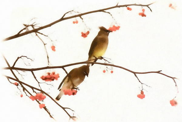 Art Print featuring the photograph Waxwing Wonders by Andrea Kollo