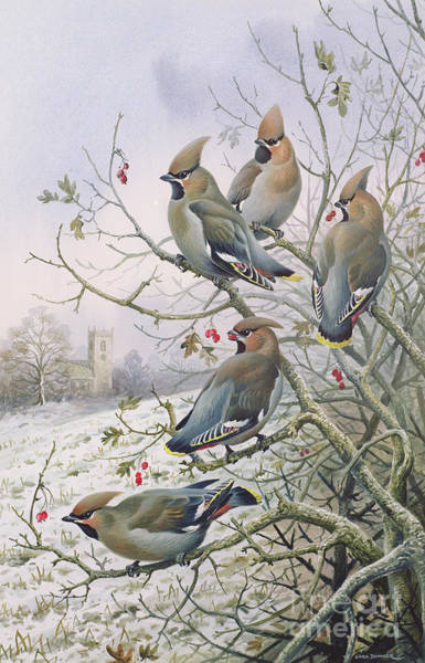 Wax Painting - Waxwings by Carl Donner