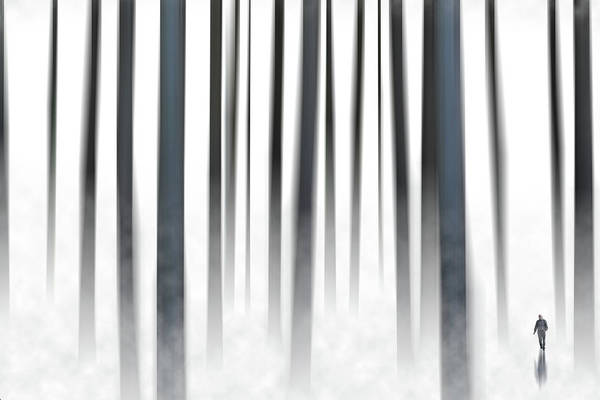 Wall Art - Photograph - Way Out In The Woods by Rabiri Us