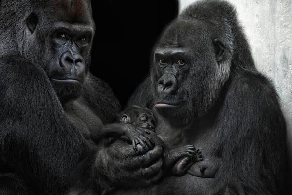 Monkey Wall Art - Photograph - We Are Family by Joachim G Pinkawa