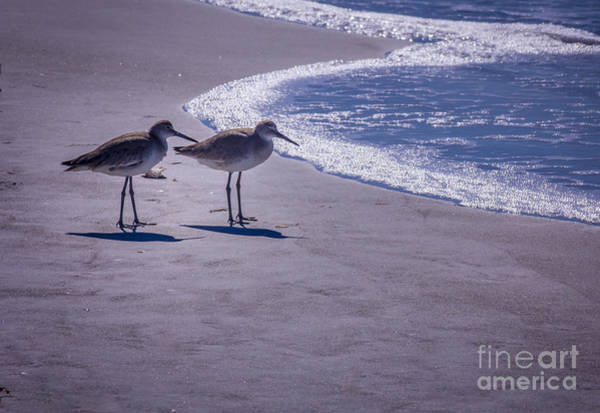 Sandpiper Photograph - We Stand Together by Marvin Spates
