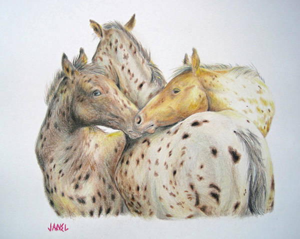Appaloosa Drawing - We Three by Janel Eaton