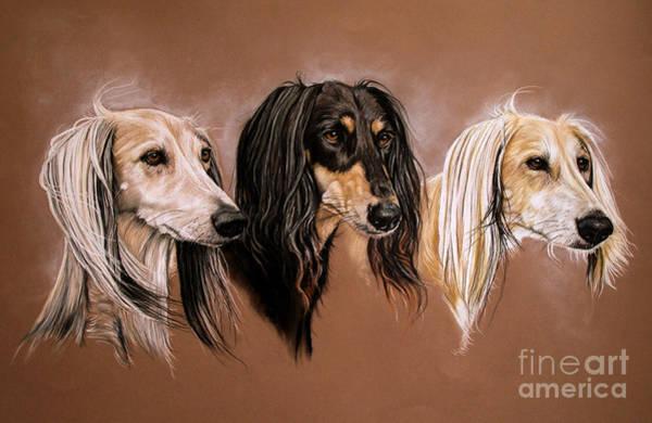 Saluki Drawing - 'we Three Salukis' by Caroline Collinson