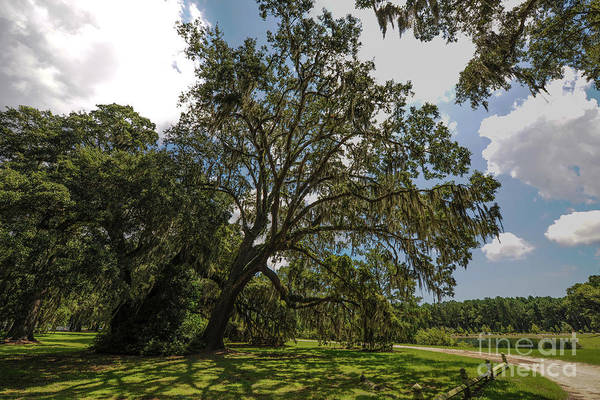 Photograph - Wealthy Plantation Grounds by Dale Powell