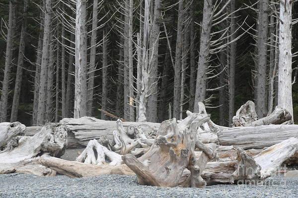 Photograph - Weathered Beach Trees by Carol Groenen