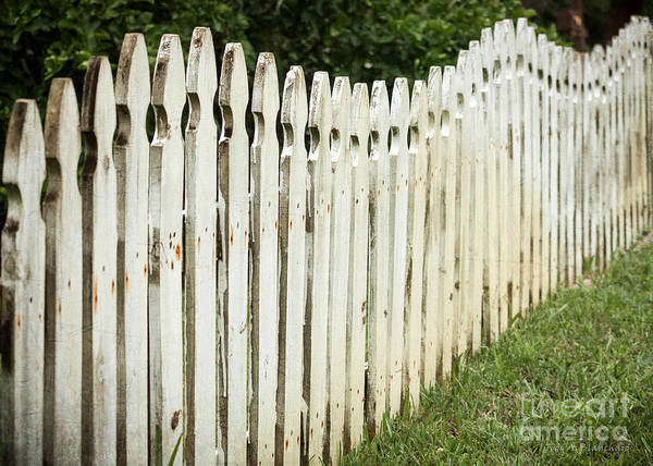 Photograph - Weathered Fence by Todd Blanchard