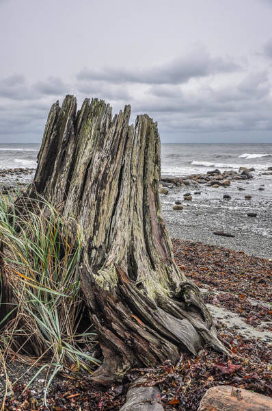 Photograph - Weathered Stump I by Roxy Hurtubise