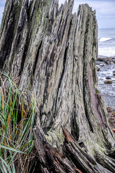 Photograph - Weathered Stump IIi by Roxy Hurtubise