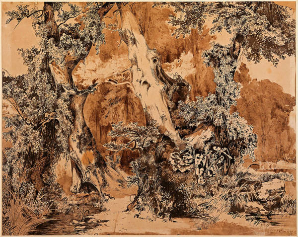 Beautiful Park Drawing - Weathered Tree Trunks In A Park by Carl Blechen