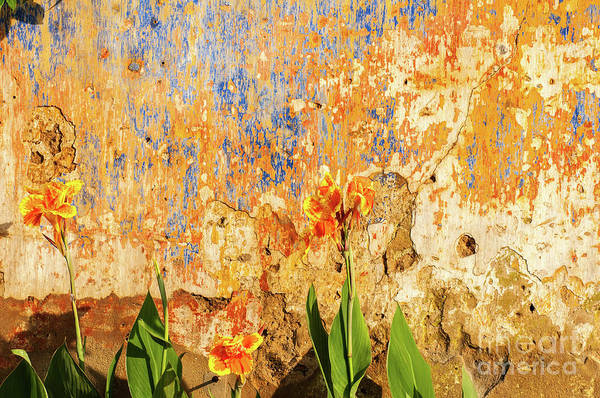 Photograph - Weathered Wall 08 by Rick Piper Photography