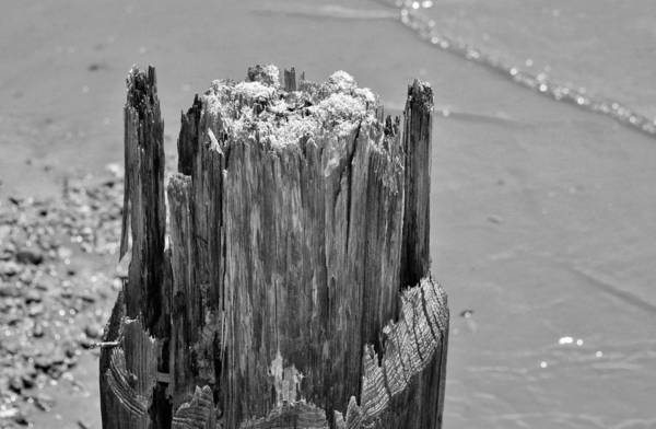 Photograph - Weathered Wood by Cynthia Guinn
