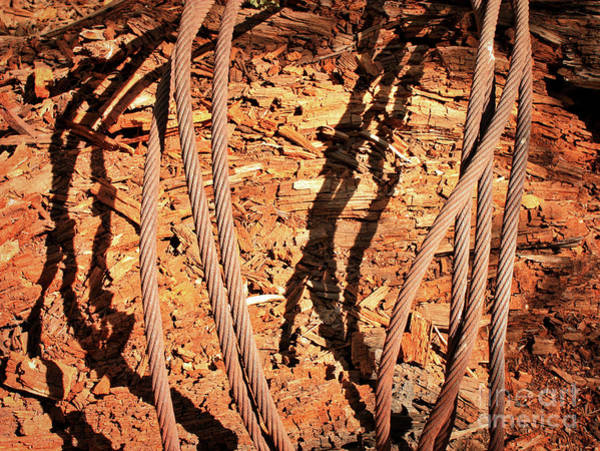 Photograph - Weathered Wood In Metal Cables by Carol Groenen